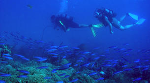 Scuba Diving-Le Marin-First scuba dives in Martinique-1