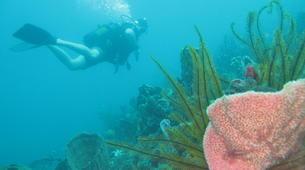 Scuba Diving-Le Marin-First scuba dives in Martinique-4