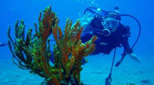 Scuba Diving-Corfu-Try Scuba Diving in Corfu-2