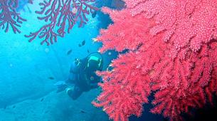 Scuba Diving-La Maddalena-Adventure dives in the La Maddalena National Park-1