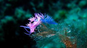 Scuba Diving-L'Île-Rousse-First scuba dive in l'Ile Rousse, Corsica-6