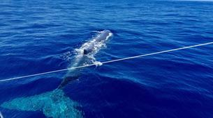 Snorkeling-Ile Maurice-Nager avec les Dauphins sur la Côte Ouest de l'Île Maurice-5