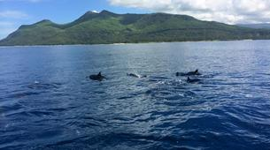 Snorkeling-Ile Maurice-Nager avec les Dauphins sur la Côte Ouest de l'Île Maurice-6