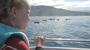 Snorkeling-Ile Maurice-Nager avec les Dauphins sur la Côte Ouest de l'Île Maurice-4