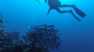 Plongée sous-marine-Iles Eoliennes-Adventure dives in Aeolian Islands-4