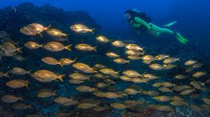 Scuba Diving-Faial-Scuba diving PADI courses in Faial, Portugal-7