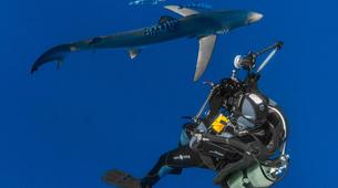 Scuba Diving-Faial-Guided adventure dives in Faial, Portugal-5