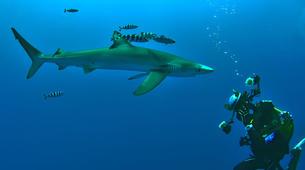 Scuba Diving-Faial-Guided adventure dives in Faial, Portugal-1