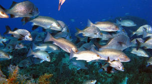 Scuba Diving-Les Trois-Îlets-Level 1 ANMP diving course in Martinique-2