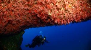 Plongée sous-marine-Porto Ota-Plongée Exploration à Porto, Corse-6
