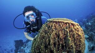 Scuba Diving-Les Trois-Îlets-Adventure dives in Martinique-5