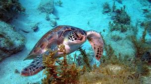 Scuba Diving-Les Trois-Îlets-Adventure dives in Martinique-6