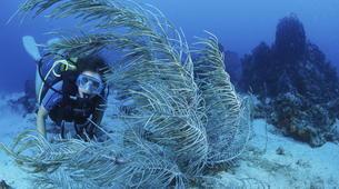 Scuba Diving-Les Trois-Îlets-Level 1 ANMP diving course in Martinique-1