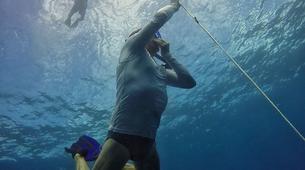 Apnée-La Réunion-Excursions Plongée en Apnée sur les Récifs de l'île de La Réunion-2