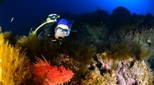 Scuba Diving-Santa Maria-Guided adventure dives around Santa Maria, Azores-1