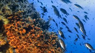 Apnée-Cinque Terre-Spearfishing SSI courses in Cinque Terre-2