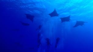 Scuba Diving-Santa Maria-Guided adventure dives around Santa Maria, Azores-6