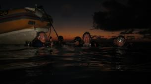 Scuba Diving-Port-Louis, Grande-Terre-Adventure dives in the caves of Port Louis, Guadeloupe-1