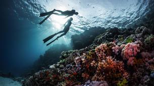 Plongée sous-marine-Bora Bora-Baptême de Plongée Sous-Marine à Bora Bora-2