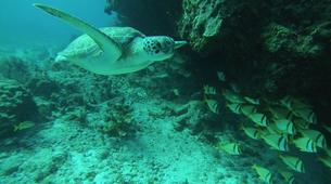Scuba Diving-Cancun-Reef Diving in Isla Mujeres National Marine Park-4