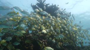 Scuba Diving-Cancun-Reef Diving in Isla Mujeres National Marine Park-1