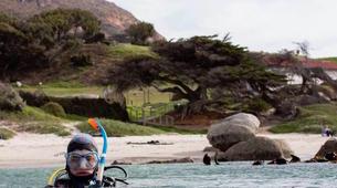 Plongée sous-marine-Le Cap-Open Water scuba diving course in Cape Town-6