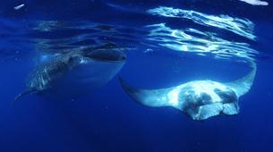 Snorkeling-La Paz-Whale shark snorkeling excursion in Playa del Carmen-6