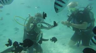 Plongée sous-marine-Moorea-Baptême de Plongée Moorea-1