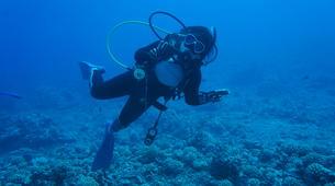 Scuba Diving-Moorea-Guided adventure dives in Mo'orea-5