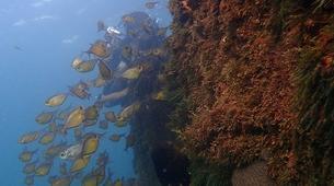 Scuba Diving-Salvador-Guided adventure dives in Porto da Barra-4