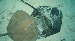 Snorkeling-Moorea-Expédition privée à la découverte du Lagon de Moorea-1