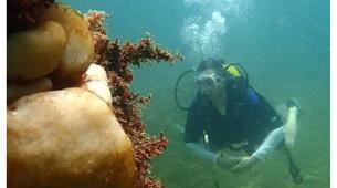Scuba Diving-Salvador-Guided adventure dives in Porto da Barra-3