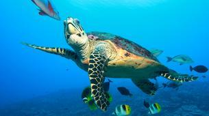 Scuba Diving-Moorea-First scuba dive in Mo'orea-3