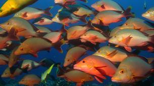 Scuba Diving-Moorea-First scuba dive in Mo'orea-4