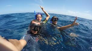 Shark Diving-Playa del Carmen-Whale shark snorkelling excursion in Playa del Carmen-3