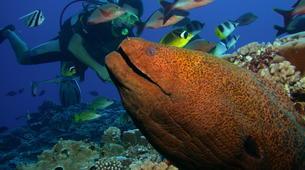 Scuba Diving-Moorea-Guided adventure dives in Mo'orea-2