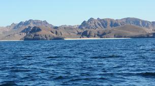 Wildlife Experiences-La Paz-Humpback whale watching in La Paz-6