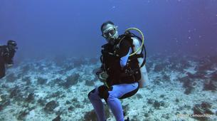 Shark Diving-Playa del Carmen-Bull shark diving excursion in Playa del Carmen-4