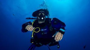 Shark Diving-Playa del Carmen-Bull shark diving excursion in Playa del Carmen-6