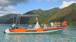 Snorkeling-Moorea-Private Lagoon discovery expedition in Moorea-4