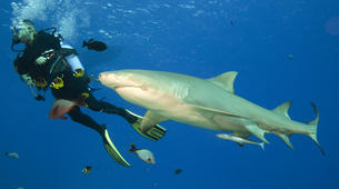 Scuba Diving-Moorea-Guided adventure dives in Mo'orea-1