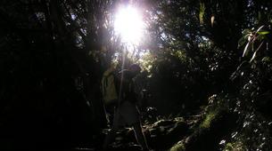 Hiking / Trekking-Cirque de Salazie, Hell-Bourg-Hiking in the Belouve forest, Reunion Island-3