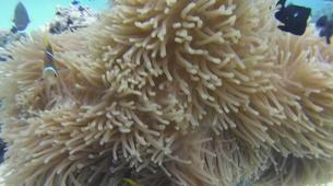 Scuba Diving-Moorea-First scuba dive in Mo'orea-5
