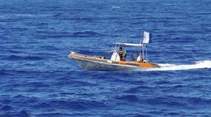 Plongée avec les Requins-Moorea-Expédition Requins-Citron à Moorea-4