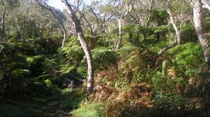 Hiking / Trekking-Cirque de Salazie, Hell-Bourg-Hiking in the Belouve forest, Reunion Island-4