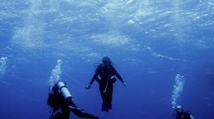 Shark Diving-Playa del Carmen-Bull shark diving excursion in Playa del Carmen-2