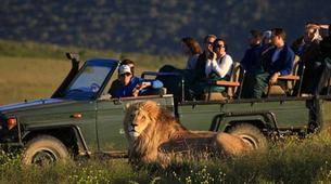 Safari-Cape Town-2D/1N Wildlife safari tour from Cape Town-2
