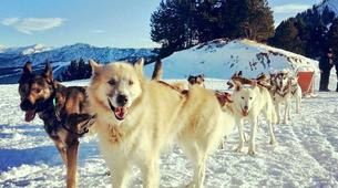 Dog sledding-Andorra-Mushing excursion in Grau Roig-1