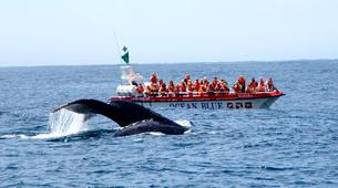 Wildlife Experiences-Plettenberg Bay-Whale watching excursion in Plettenberg bay-1