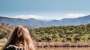Safari-Cape Town-2D/1N Wildlife safari tour from Cape Town-5